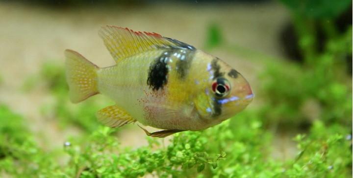 C mo saber si un pez est enfermo for Como saber si un pozo esta legalizado