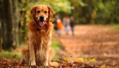 actuar ante perros con cancer