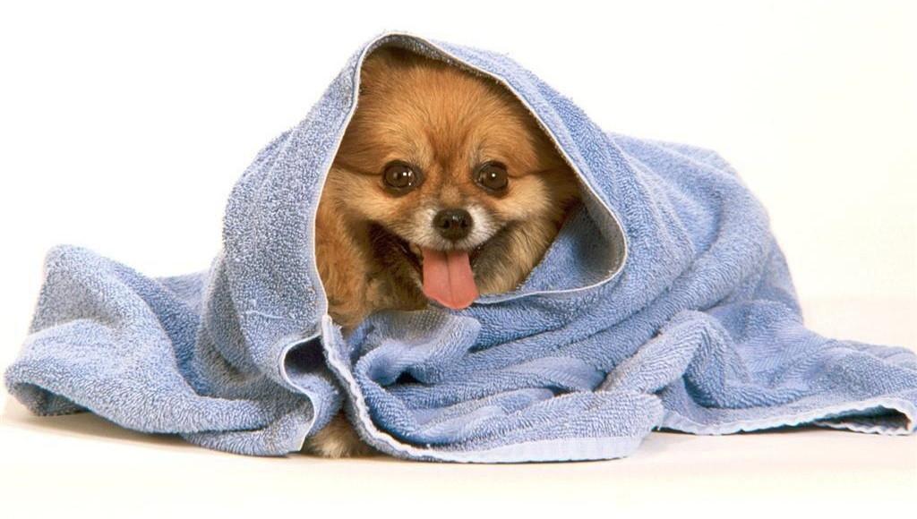 C mo ba ar a un perro paso a paso - Como banar a un perro ...