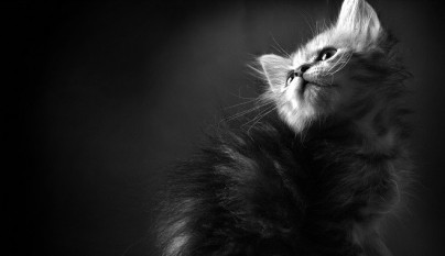 peso ideal gatos