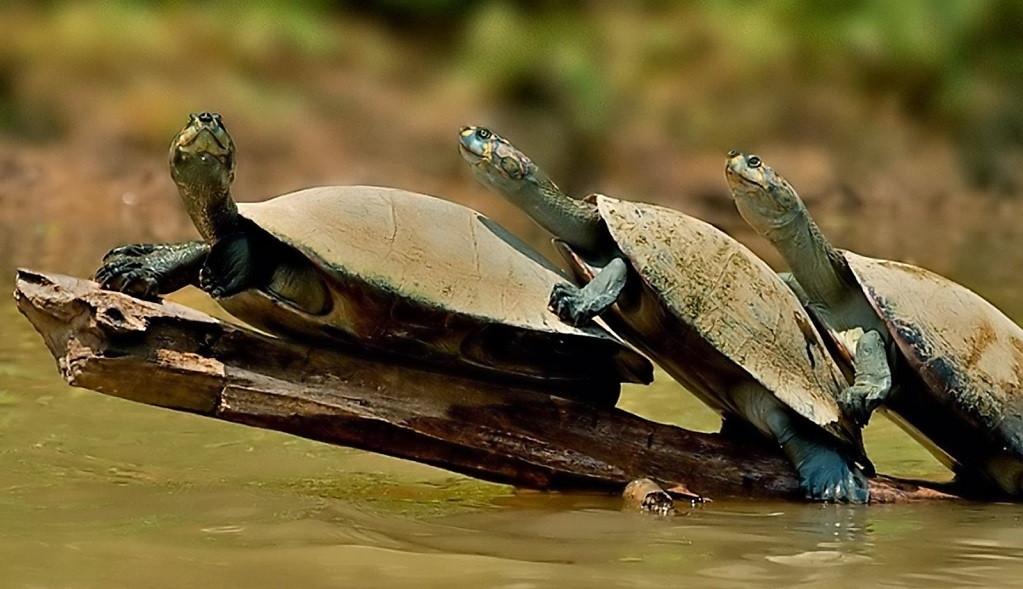 Enfermedades de la tortuga de agua