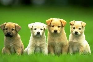 Cuidados esenciales para los perros recién nacidos