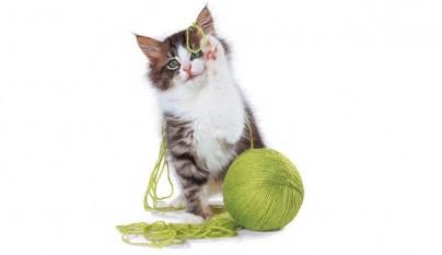 juguetes caseros gatos1