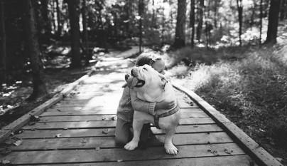 El mejor amigo de Harper13