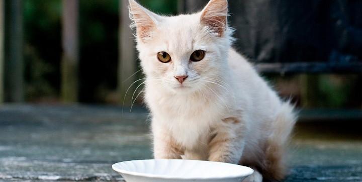 Los gatos y la leche1