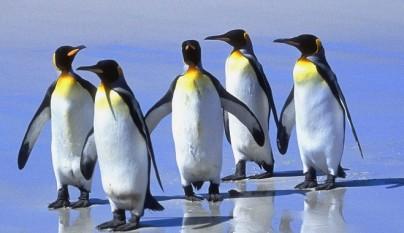 Pinguinos no pueden volar