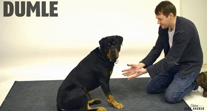 Reaccion perros ante la magia