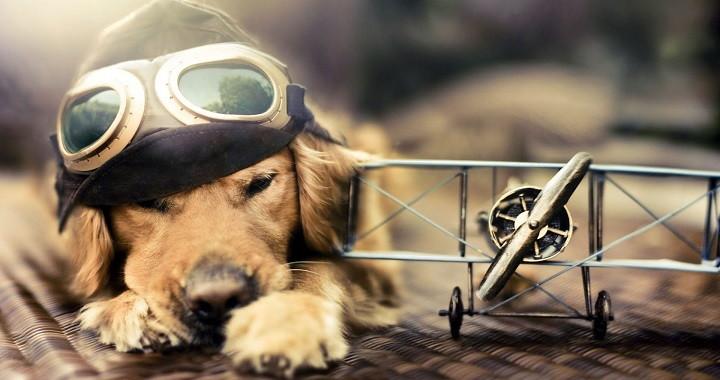 Volar con perros