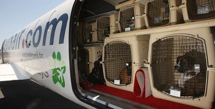 Volar con perros1
