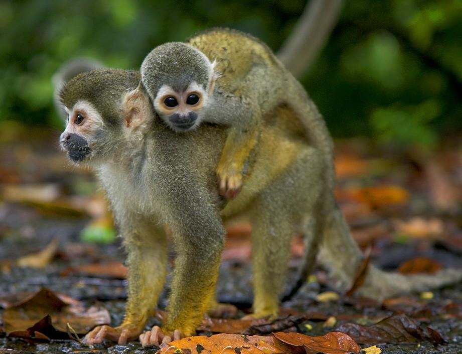 Animales exoticos1 - Imagenes de jardines exoticos ...