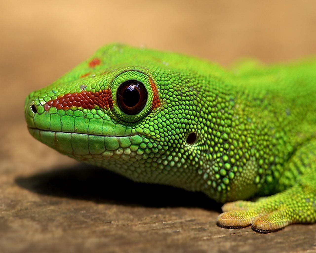 CACHORROS Y ANIMALES Animales-exoticos6
