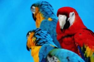 Fotos de animales exóticos