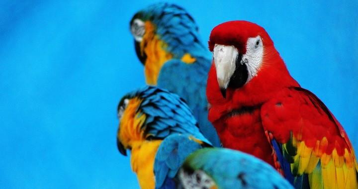 fotos animales exoticos