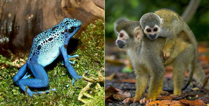 fotos animales exoticos1