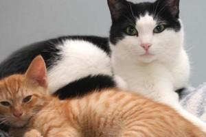 Alimentación de una gata embarazada