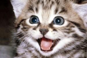 Alimentación de los gatos con diarrea