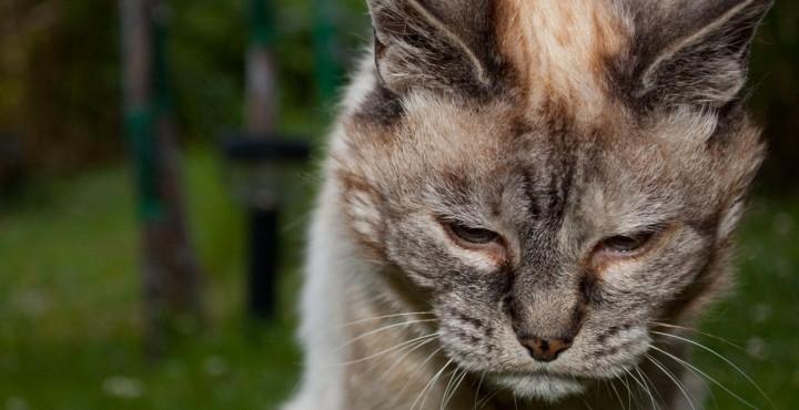Cuidados de gatos ancianos - Cuidados gato 1 mes ...