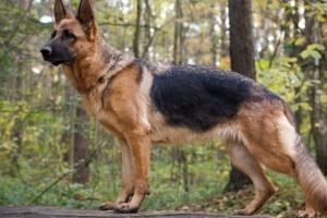 Evitar la artrosis en los perros