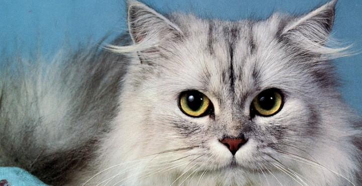 C mo eliminar los pelos del gato de la ropa - Como quitar los pelos de gato de la ropa ...