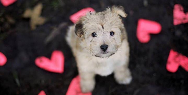 perros que buscan un hogar1