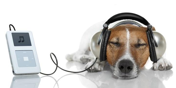 A los perros les gusta la musica