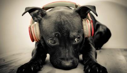 A los perros les gusta la musica1