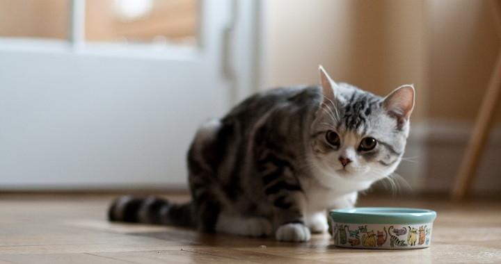 Alimentacion saludable gato