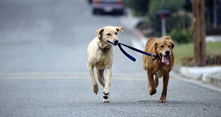 Consejos pasear perro con correa