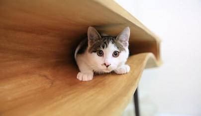 Original mesa para gatos2