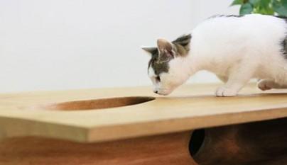 Original mesa para gatos3