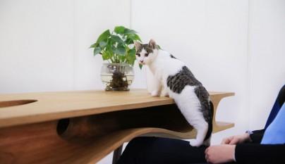Original mesa para gatos6