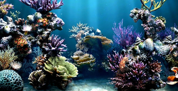Con qué limpiar el acuario