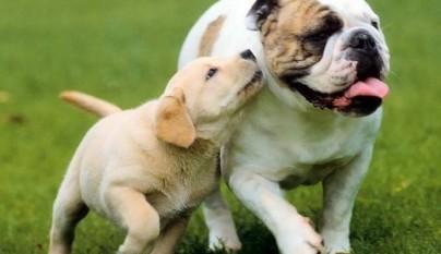 comunicacion perros 2