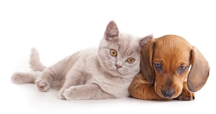 conseguir que el perro deje de atacar a gatos