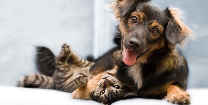 conseguir que el perro deje de atacar a gatos1