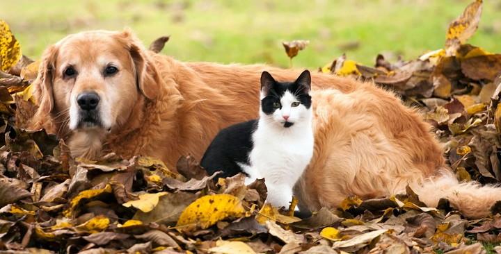 conseguir que el perro deje de atacar a gatos2