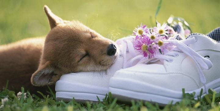 cuanto duermen los perros1