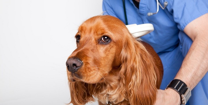 identificacion perros1