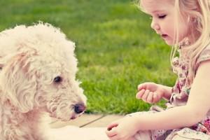 Prevenir el cáncer de piel en animales