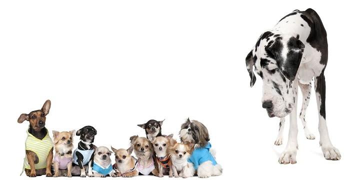 perros pequenos1