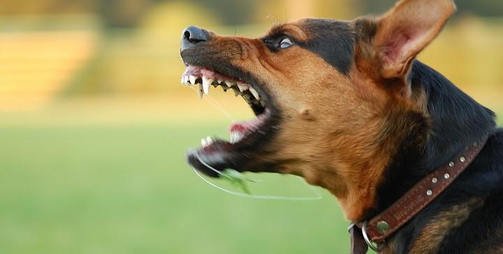 por que los perros son agresivos