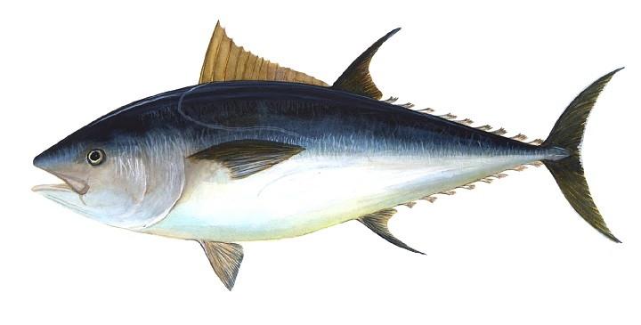 El pez mas caro del mundo