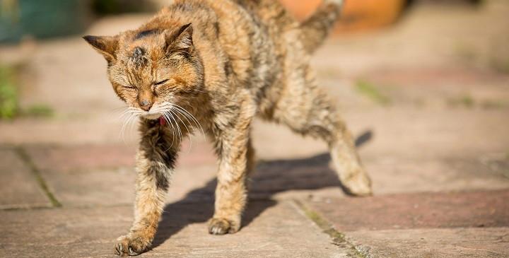 Gato-mas-viejo-del-mundo1