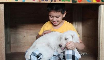 Nino refugio perros2