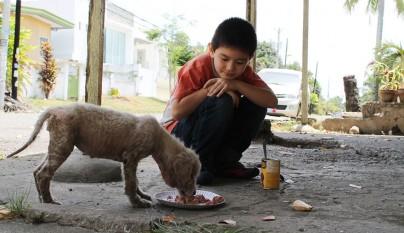 Nino refugio perros3