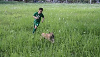 Nino refugio perros4