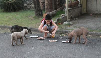 Nino refugio perros5