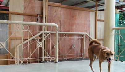 Nino refugio perros7