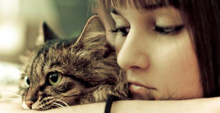 #Miedo a los #gatos