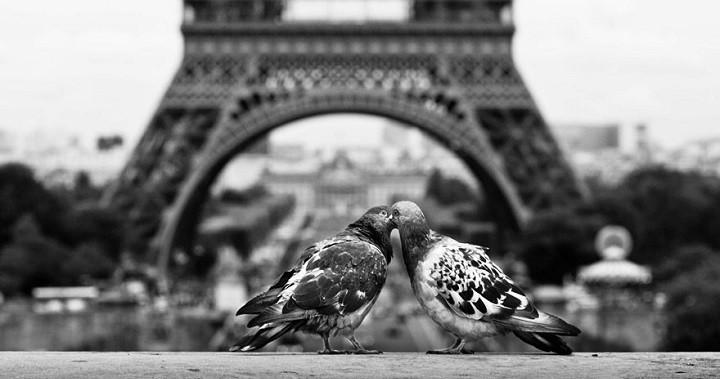 fotos animales besandose